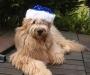 Weihnachts-Bandit