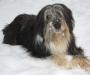 Dschiny liebt die Erfrischung im Schnee
