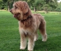 Cooper mit 9 Monaten