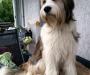 Daico mit 1 Jahr