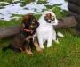 8 Wochen - Dilay und Dotty