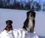 12 Wochen - Dilay liebt Schnee