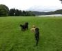 Hundewiese am Edersee