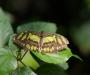 Auch auf der Insel Mainau - Schmetterlingshaus