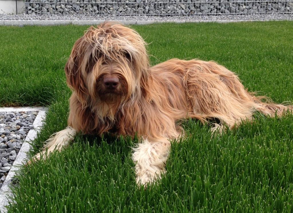 Cooper mit 15 Monaten