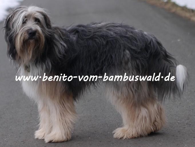www.benito-vom-bambuswald.de