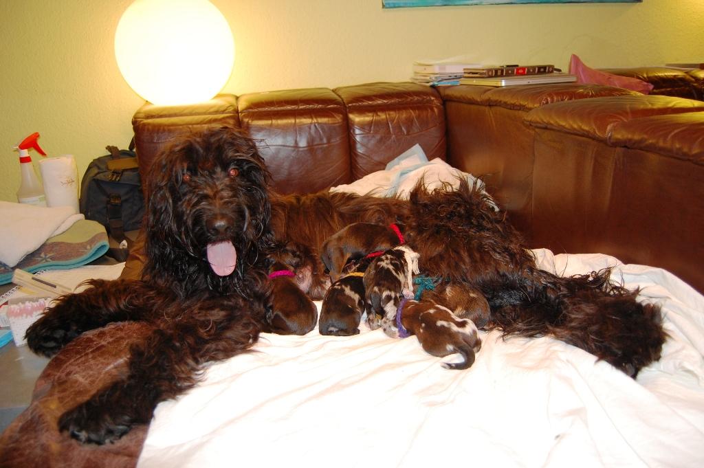 Lynn mit 7 Benito-Kindern