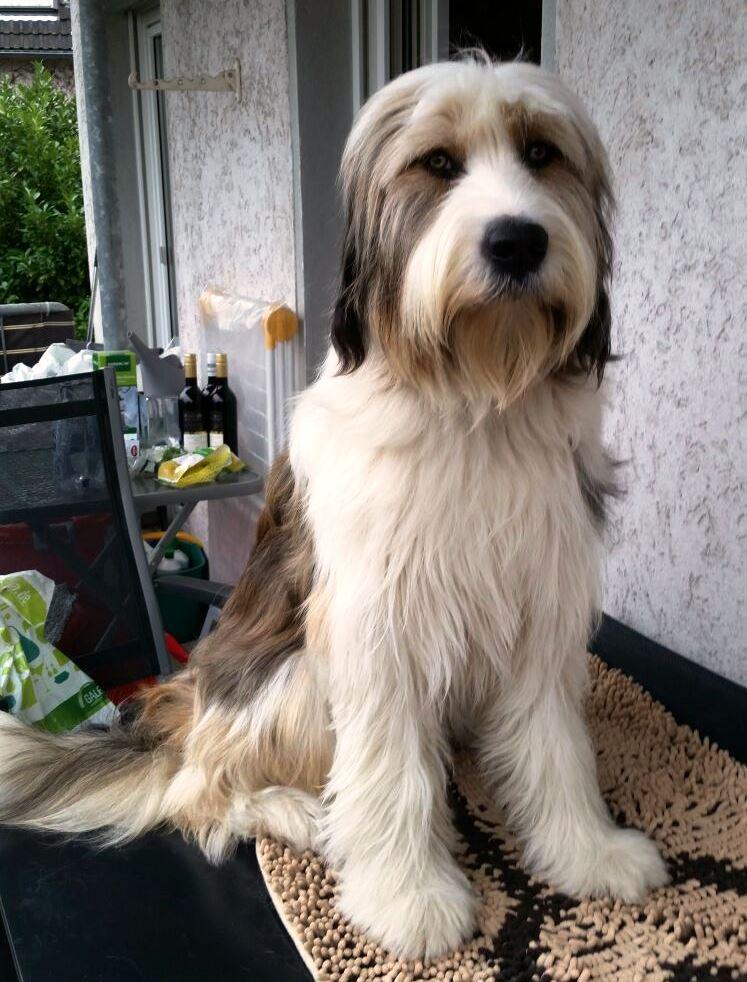 Daico mit 1 Jahr (3)