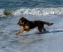 Beelou am Meer