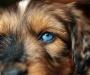 mit strahlend blaubem Auge!