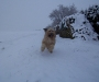 Schnee-Junkie