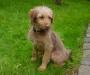 Cleo mit 4 Monaten