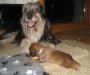 Flink bei der Sacht - Dschiny mit ihrer Letztgeborenen