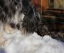 Coopers 1. Erfahrung mit Schnee - menno, kalt