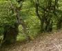 Baumgewirr auf dem Urwaldsteig