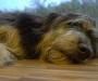 Er schläft tief und fest