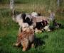 wt-battenberg-2011-01-10-2011-15-45-30-1024x76805