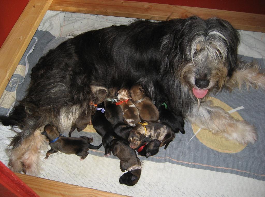 Dschiny mit ihren 10 Zwergen.