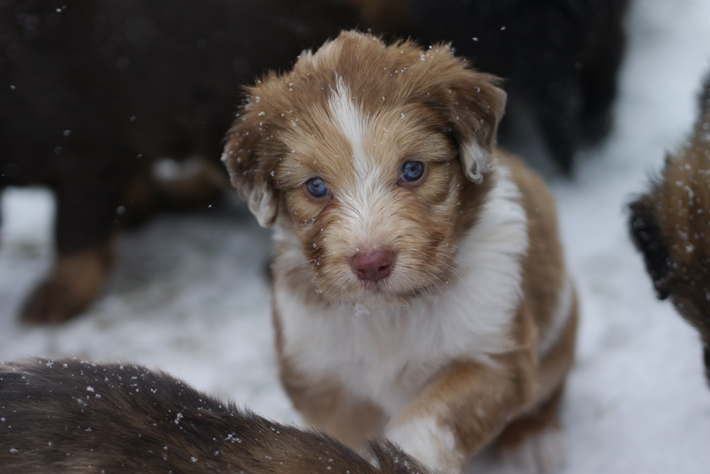 Chaya im Schneegestöber